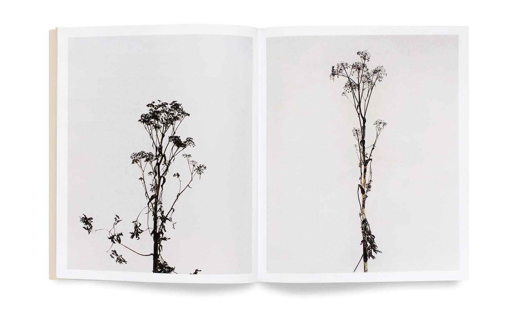 versailles-visible-invisible-toluca-studio-olivier-andreotti-POITEVIN-4.jpg